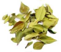 Brew for Africa Buchu Leaves, Dried (30g.)